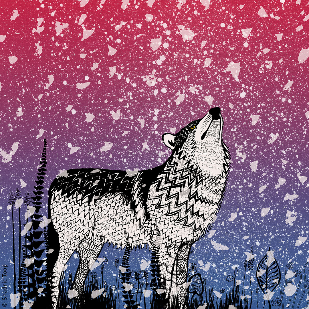 Ink drawing of a wolf in the snow - illustration by Shadric Toop